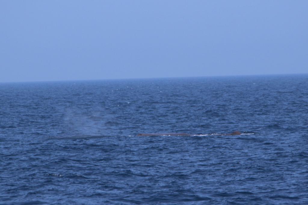 http://hdh.bglb.jp/whale1/Dscn0304.jpg